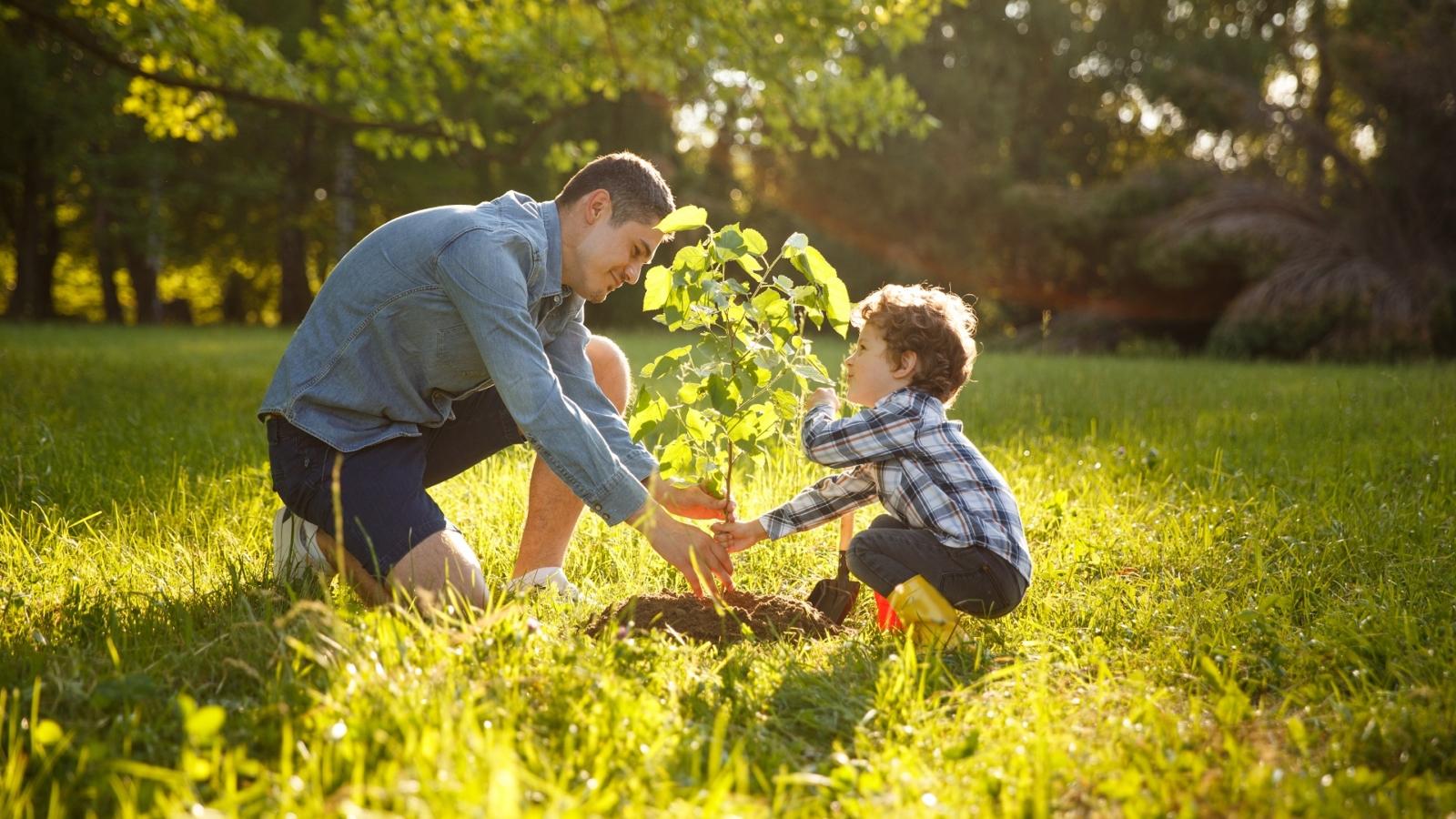 news-plant-trees-web-site (3)