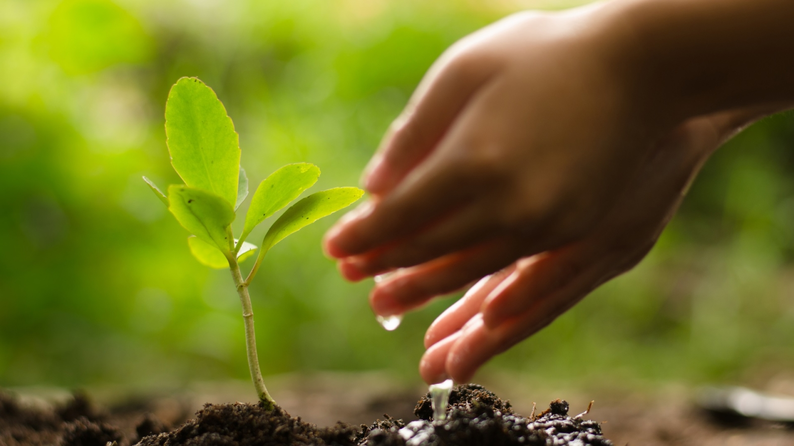 news-plant-trees-web-site (4)